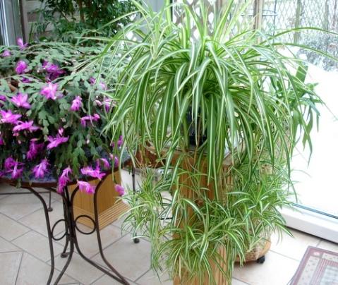 Giftige zimmerpflanzen frau flauschis katzen - Giftige zimmerpflanzen ...